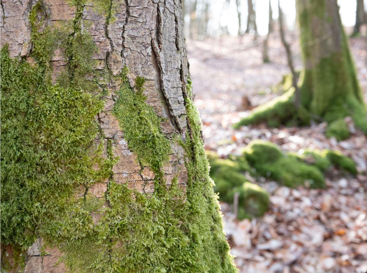 Bain de forêt Ardenne