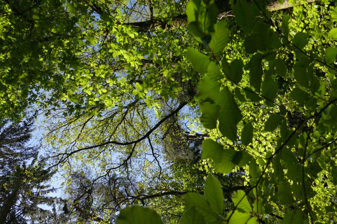 Bain de forêt en Ardenne - L'énergie sous toutes ses formes