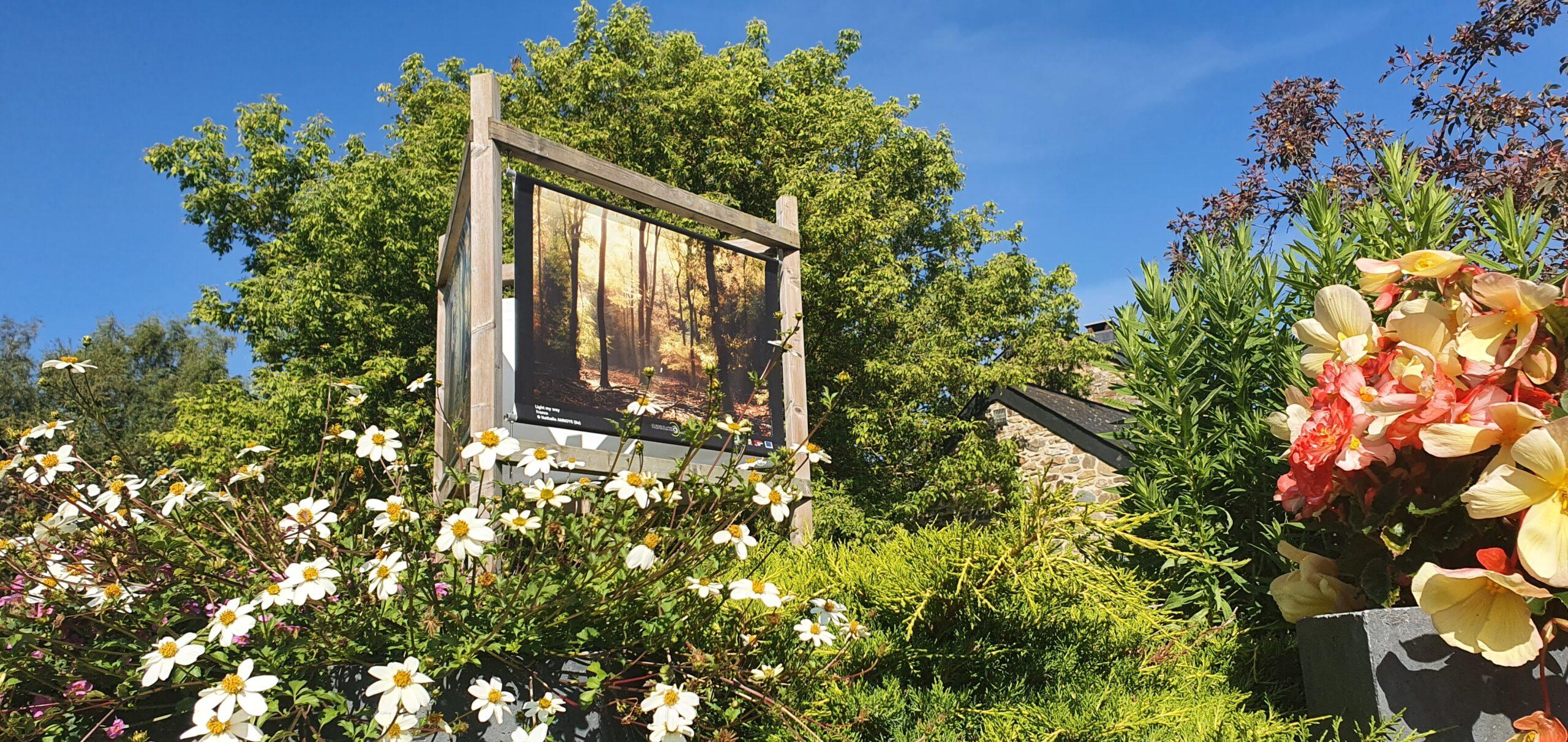Les Saisons de la Photo en Grande Forêt de Saint-Hubert