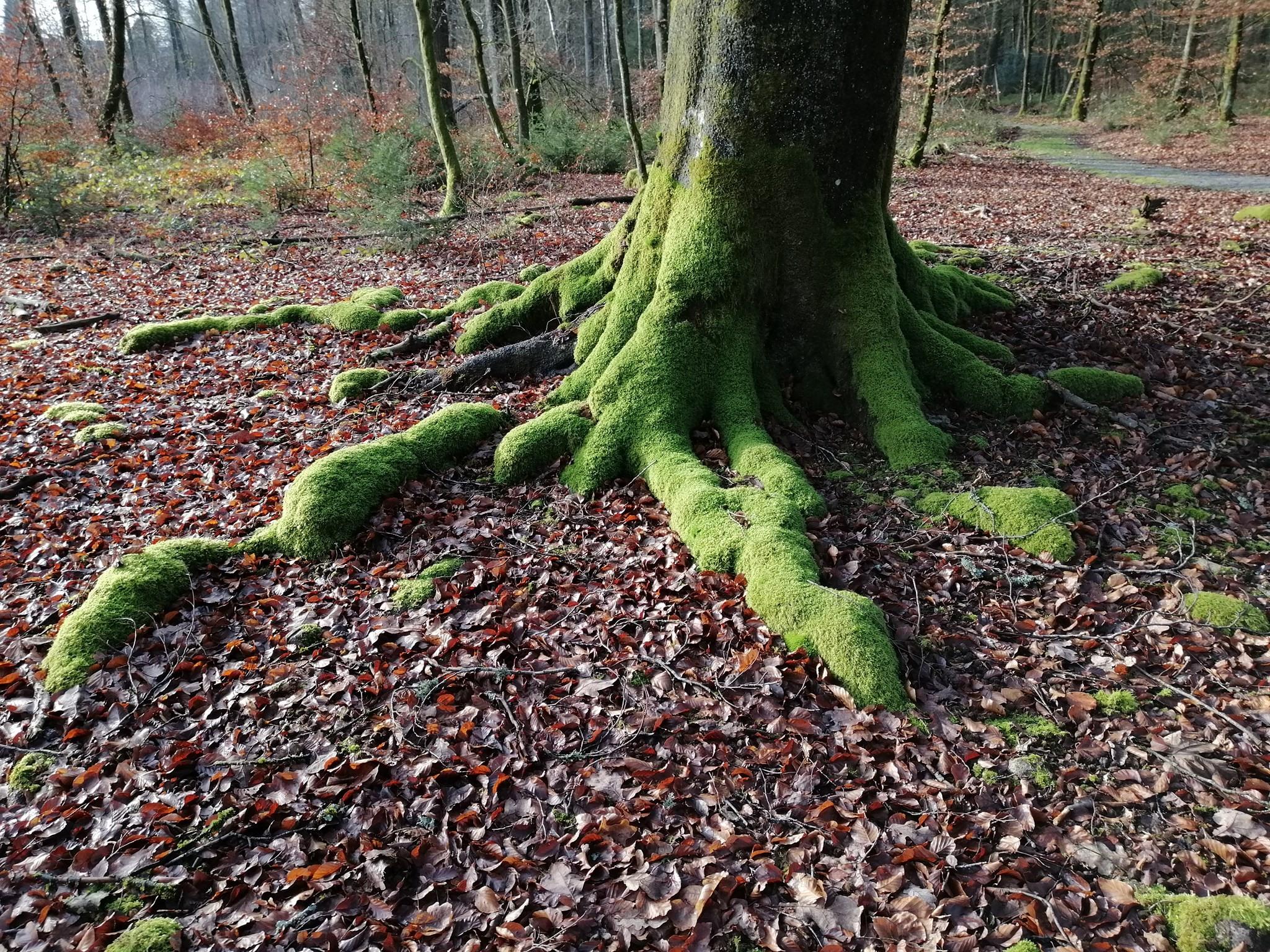 Découvrir le bain de forêt - sylvothérapie